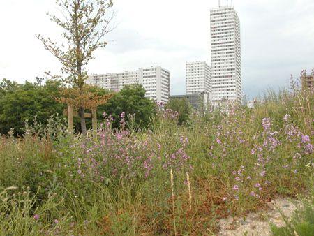 http://www.banlieuedeparis.org/images/i2004/i040622a/images/DSCN1013.jpg